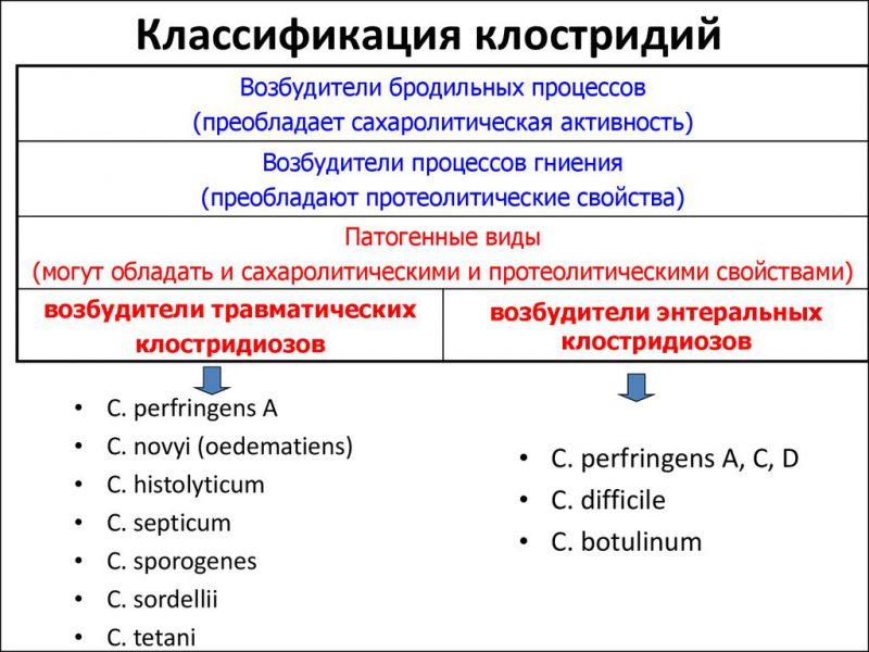разновидности клостридий