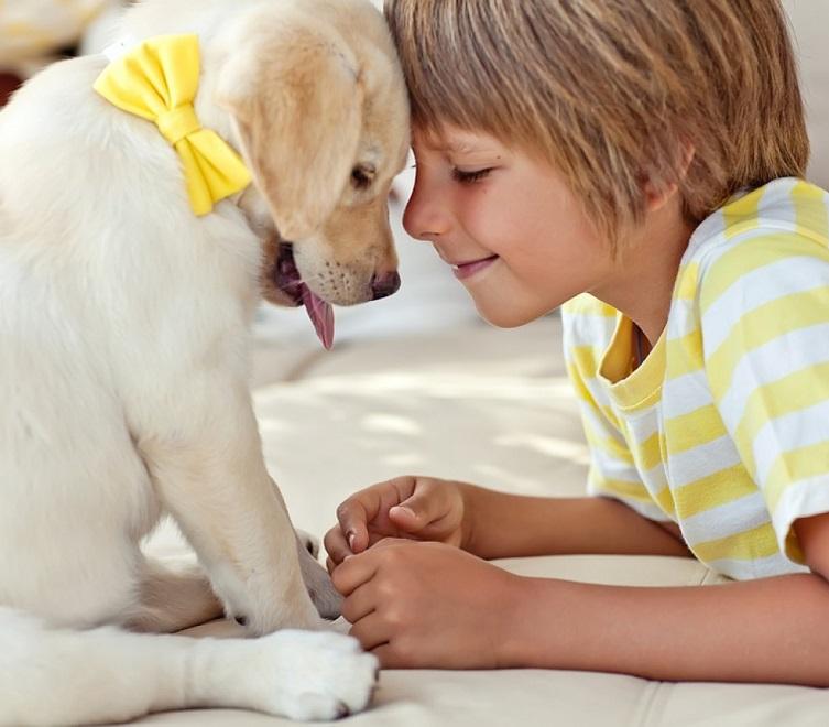 Контакт ребенка с собакой - возможная причина заражения глистами