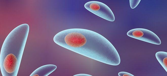 Симптомы и лечение токсоплазмоза у человека