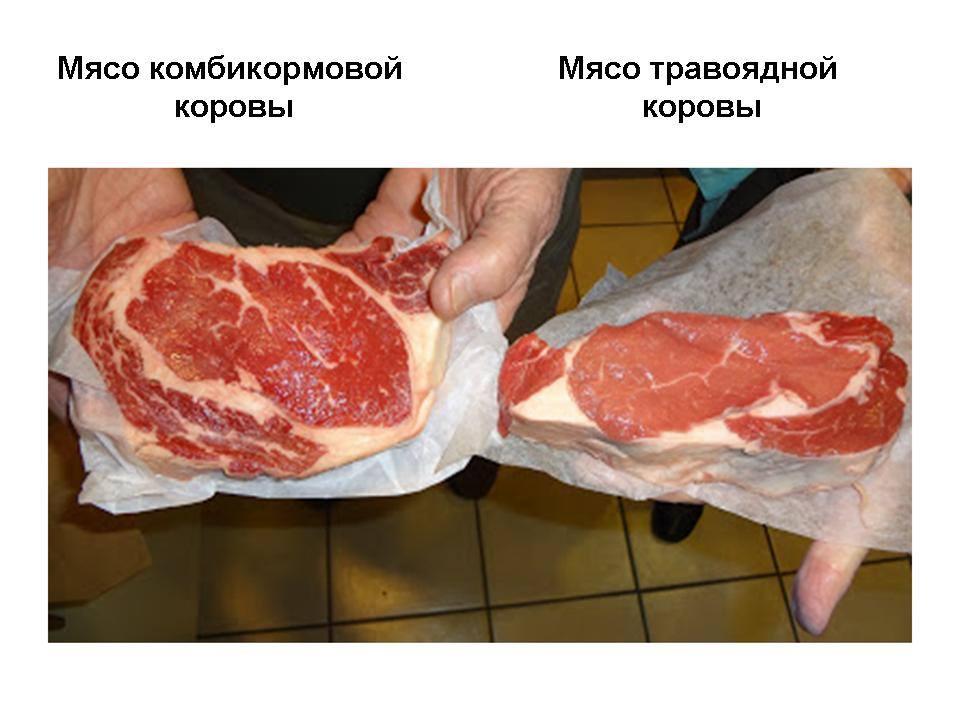 Полезное и вредное мясо
