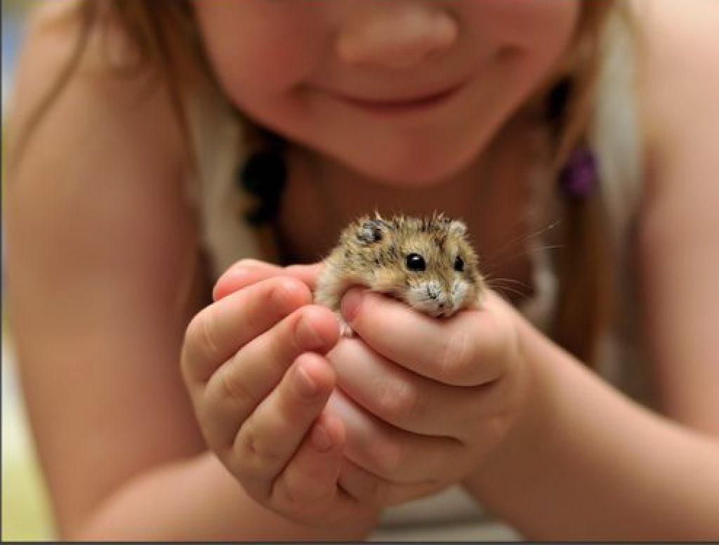 Какое домашнее животное купить ребёнку