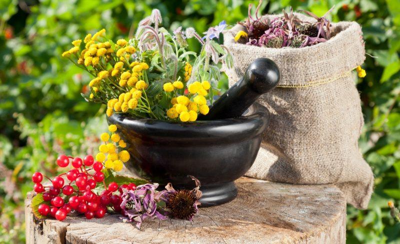 Сбор из целебных растений