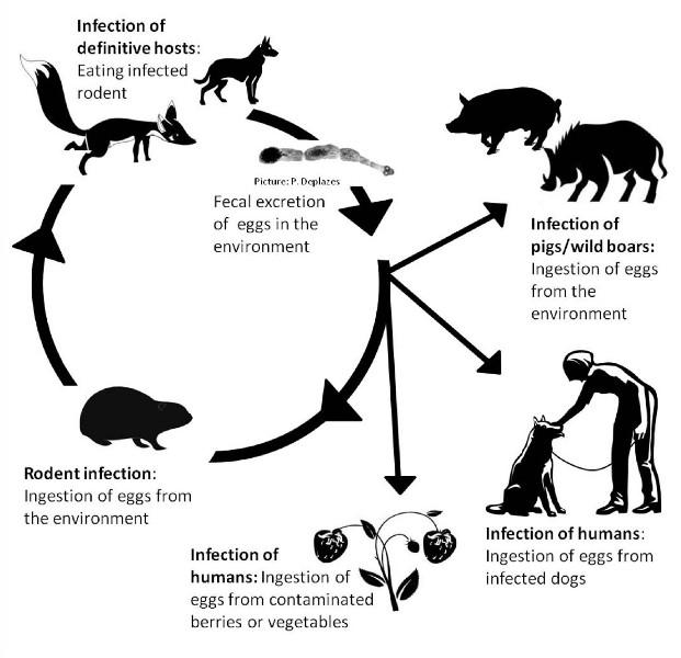 Как черви попадают в организм