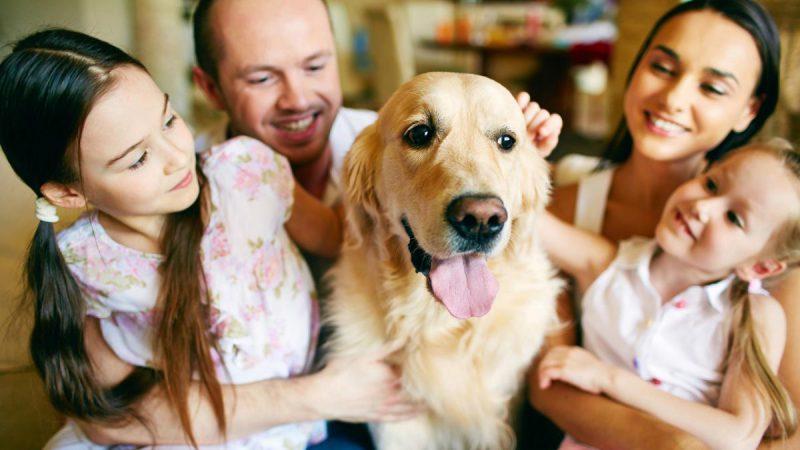 собака, как разносчик глистов у всей семьи