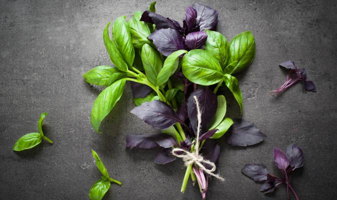 Чем базилик фиолетовый полезен для женщин
