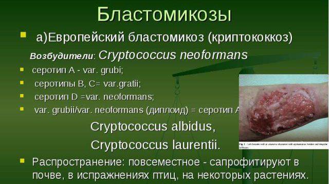 бластомикозы