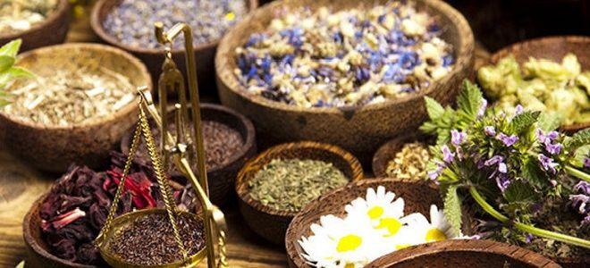 Народные средства для лечения токсоплазмоза