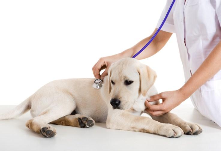 обследование у ветеринара