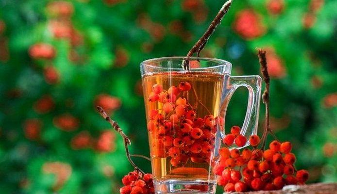 Чай (отвар) из красной рябины: польза и как заварить
