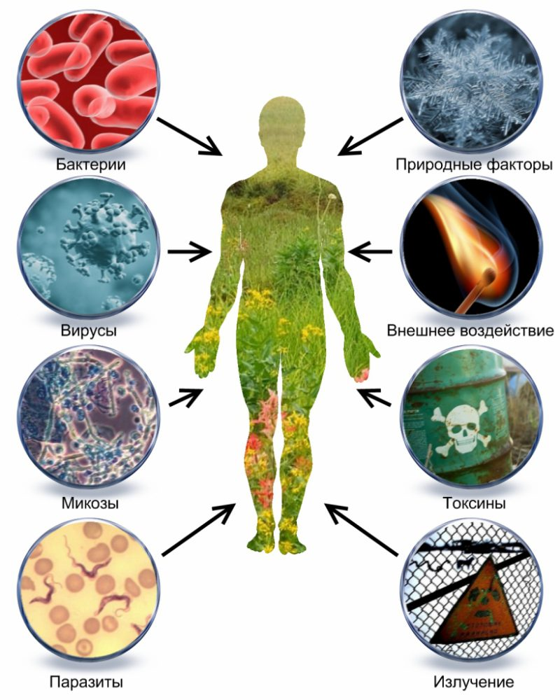 организм человека