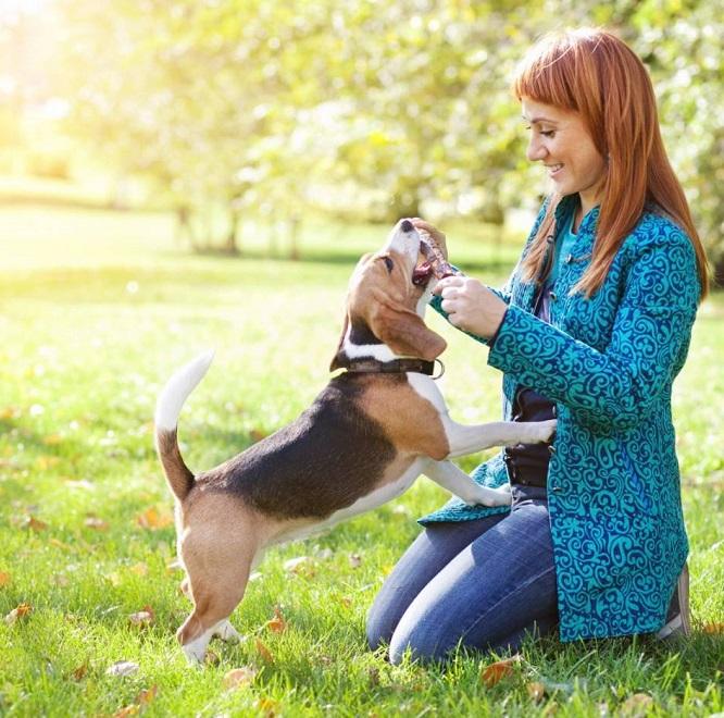 Контакт человека с собакой - путь заражения токсокарозом если животное инфицировано
