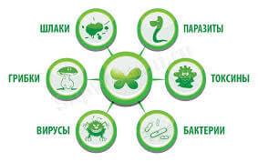Влияние токсинов на организм человека