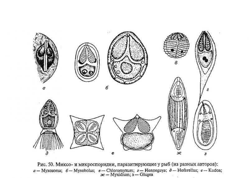 Микроспоридии