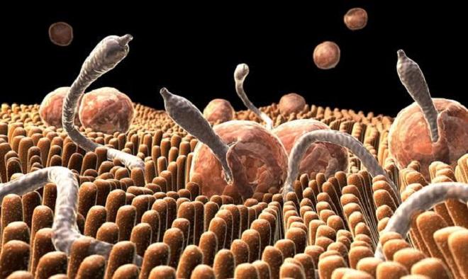 Гельминты в организме человека