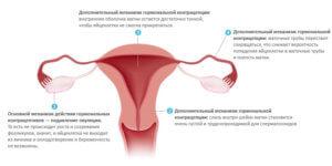 Принцип действия пластыря гормонального