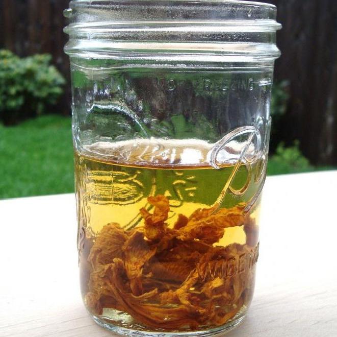 Настойка из лисичек и водки от токсокароза