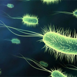 Осложнения и последствия сальмонеллеза